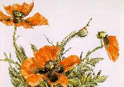 Demuth, Charles Poppies oil painting